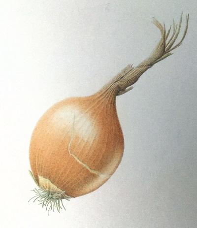 onion2web