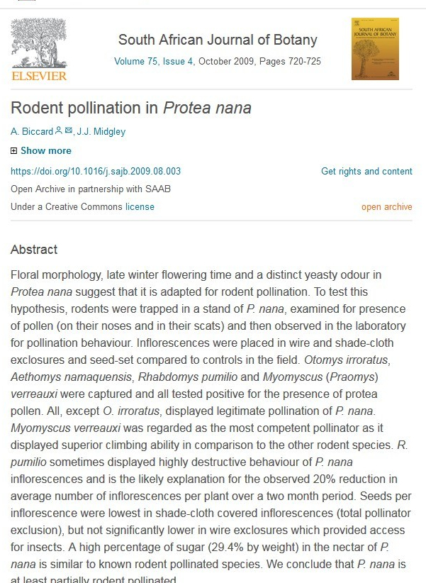 protea nana poll