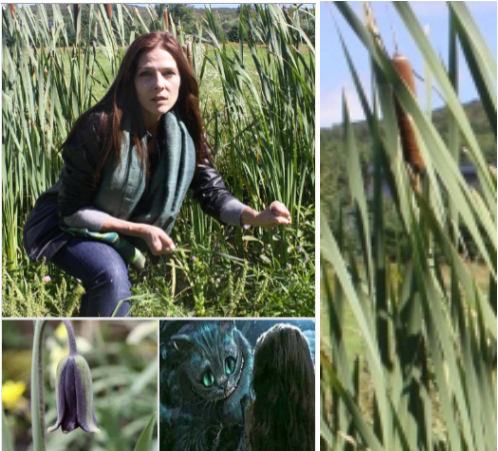 CollageShelshireWithCattails